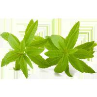 Lemon Verbena Hydrosol